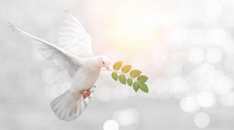 Roh Kudus Setiap Hari (Roma 8 : 1-39)